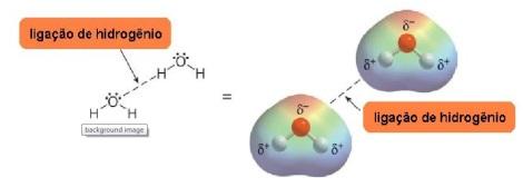 Ligação de hidrogênio entre as moléculas de água.